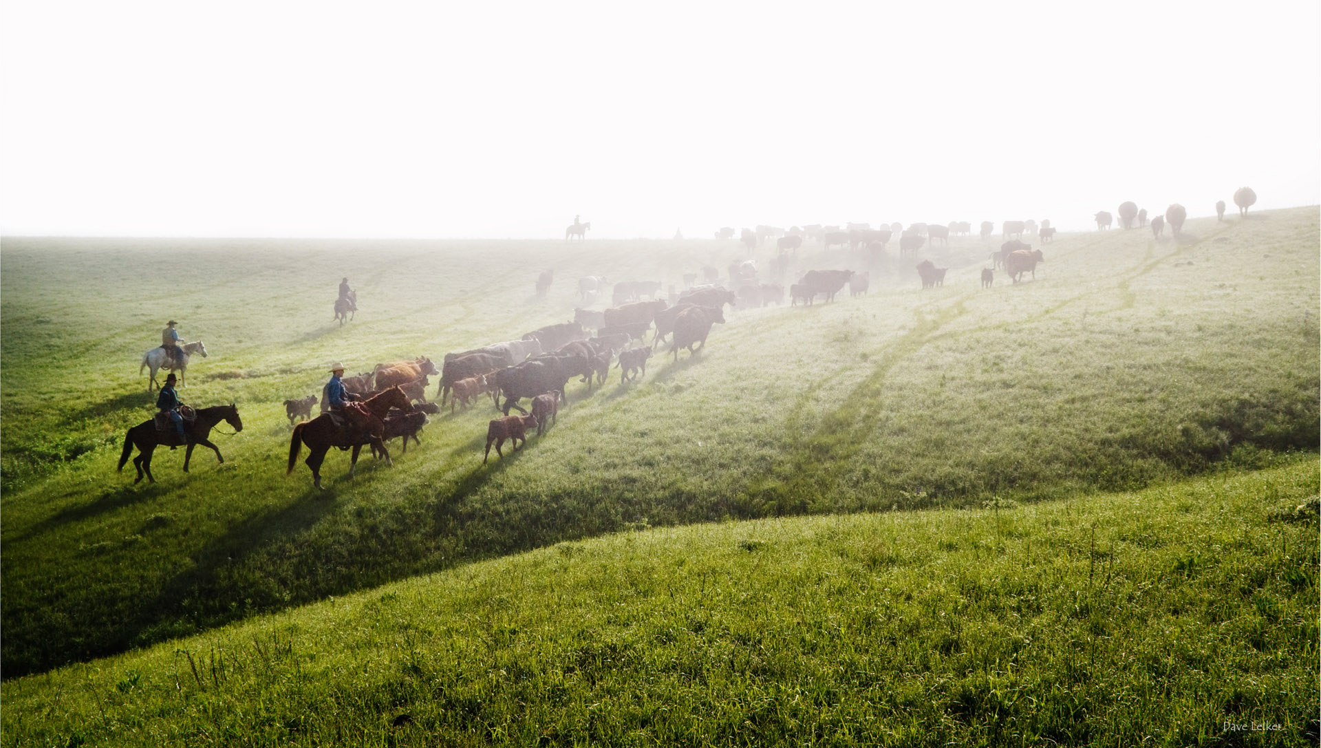 fh_cattle_drive_9458_lg