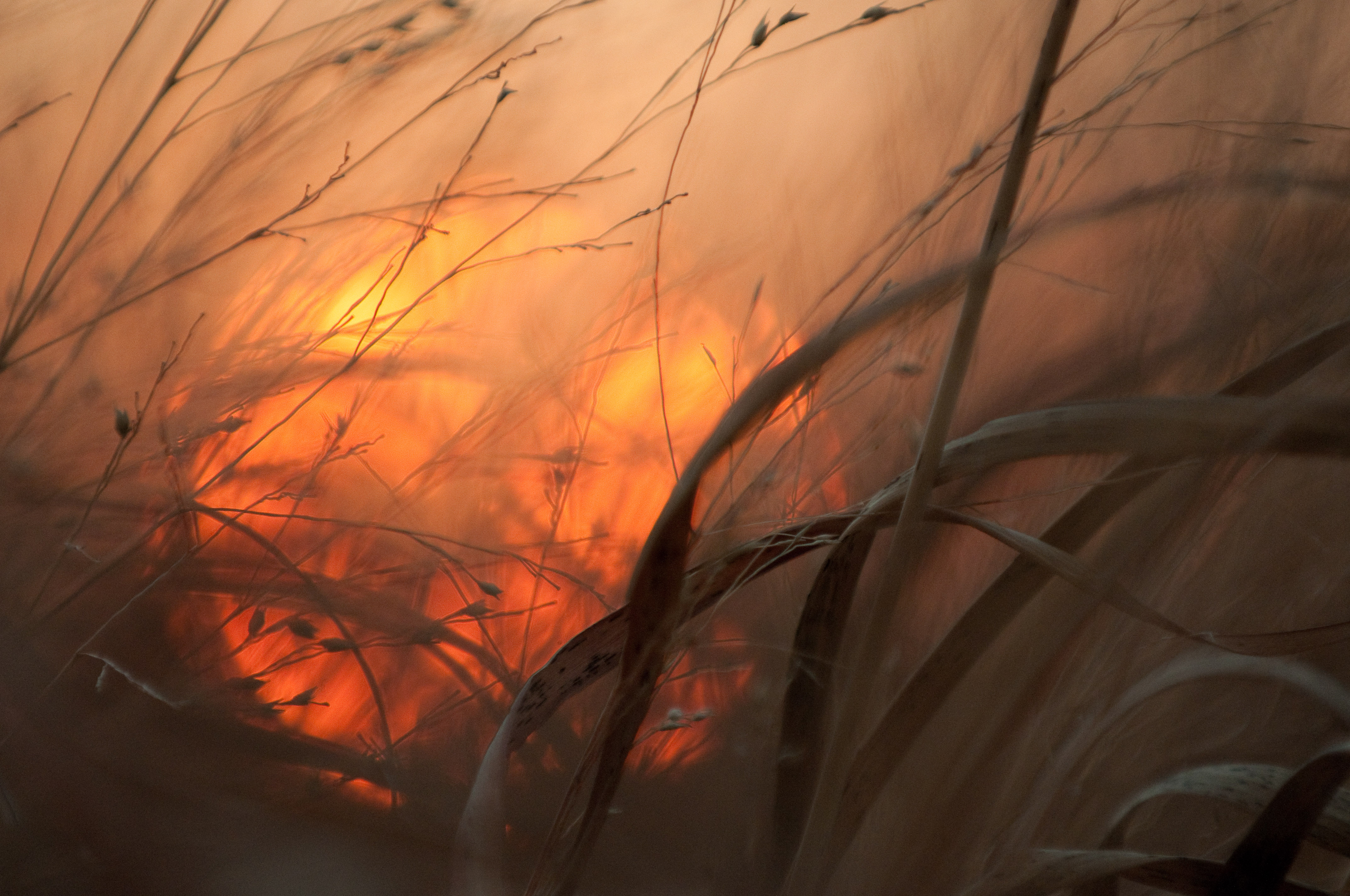 grasslands_sunset_2743z
