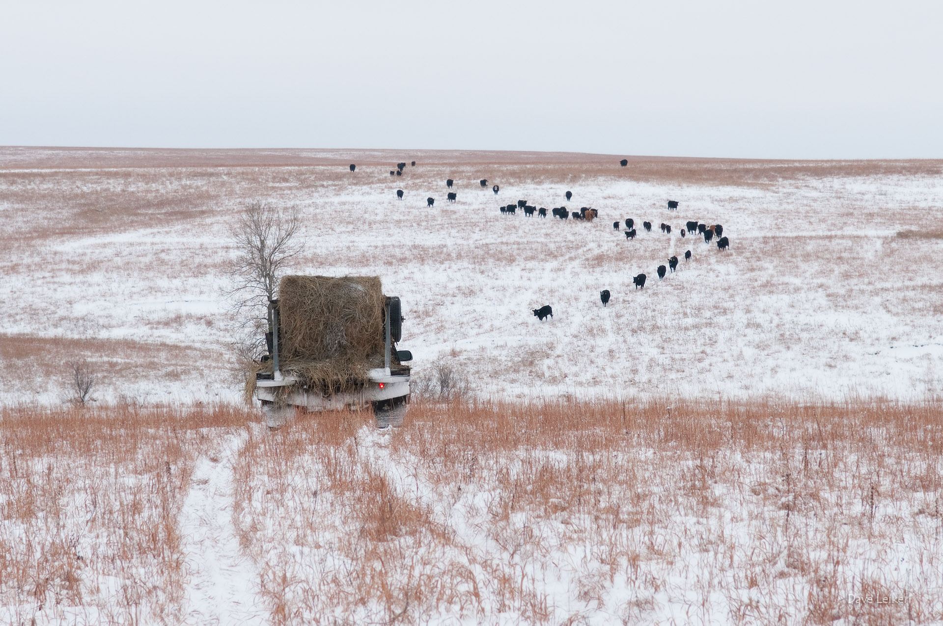 winter_ranching_0903