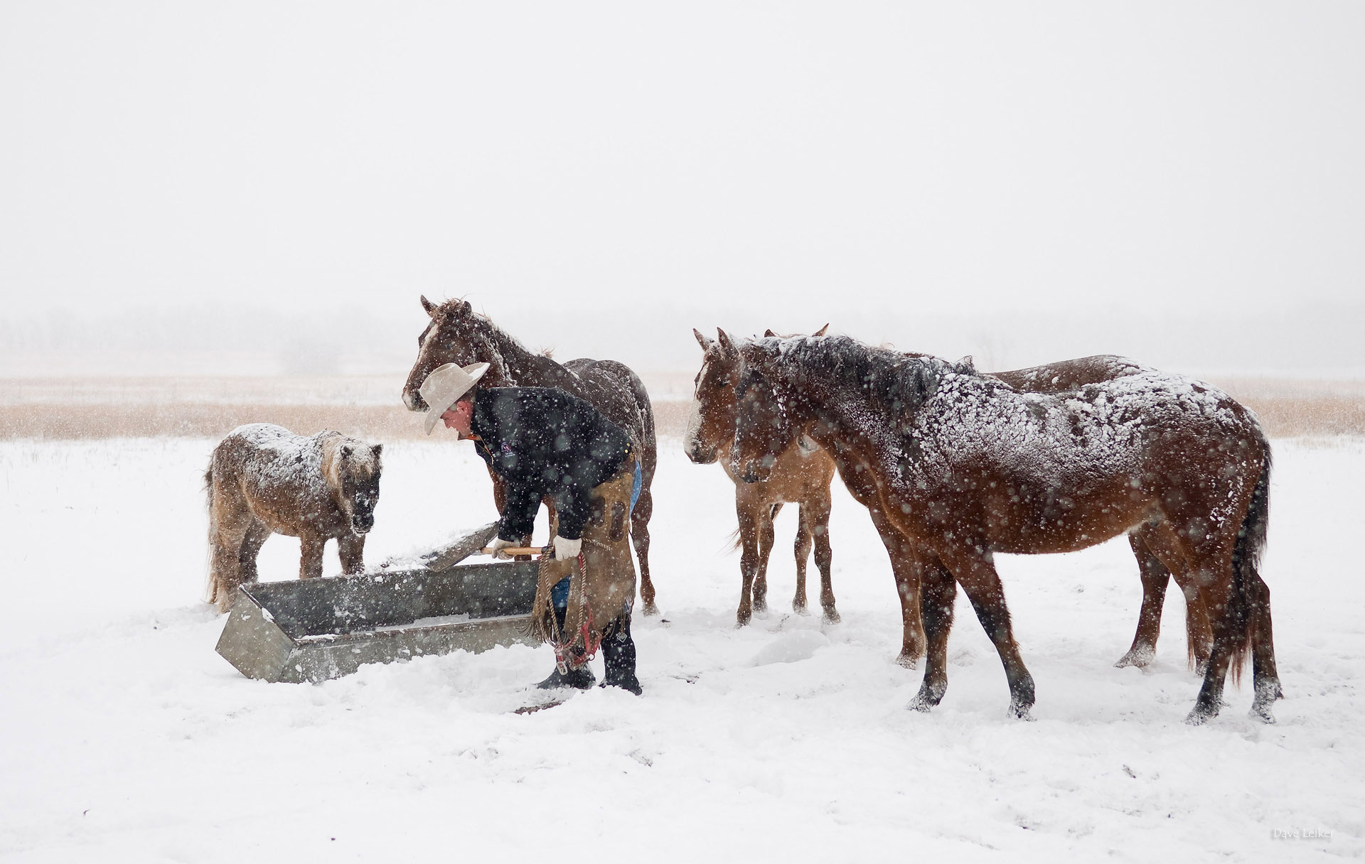 winter_ranching_0522b